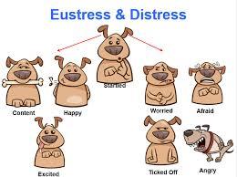 eustress