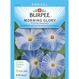 hallucinogenic-morning-glory-seeds-are-readily-available-at-garden-stores-and-nurseries-for-around