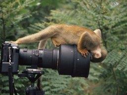 monkey-camera-2