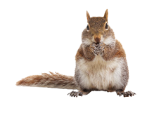 chipmunk-clipart-transparent-background-16