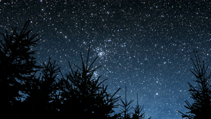 timelapse-of-starry-night-sky-and-swaying-fir-trees_h3geiyzmx_thumbnail-full01