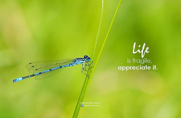 life fragile