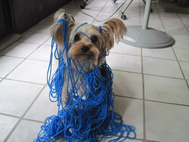 dog-tangled-up-in-blue-1