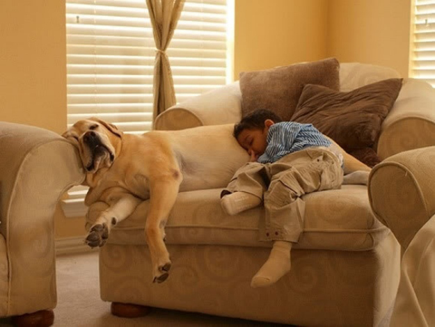 very-funny-dog-and-kid-sleeping-together-picture